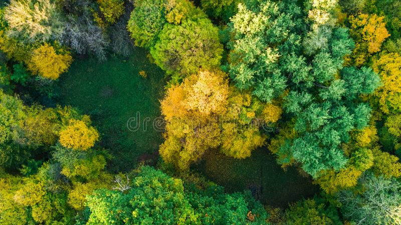 Golden autumn background, aerial drone view of beautiful forest landscape with yellow trees from above. Golden autumn background, aerial top view of beautiful stock photos