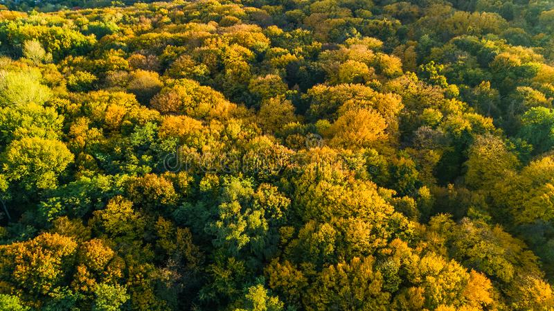 Golden autumn background, aerial drone view of beautiful forest landscape with yellow trees from above. Golden autumn background, aerial top view of beautiful stock images