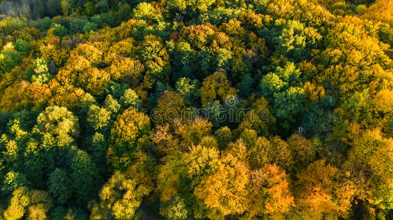 Golden autumn background, aerial drone view of beautiful forest landscape with yellow trees from above. Golden autumn background, aerial top view of beautiful stock photo