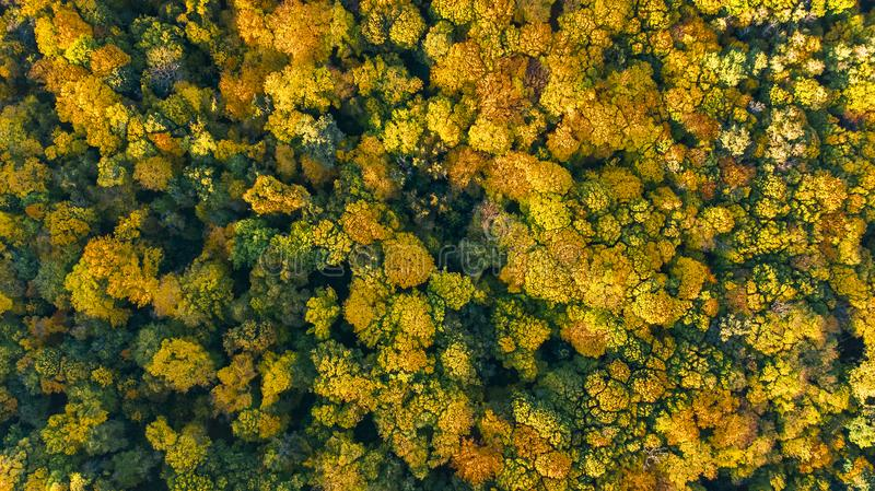 Golden autumn background, aerial top view of forest landscape with yellow trees stock image