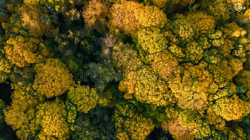 Golden autumn background, aerial view of forest landscape with trees from above stock photo