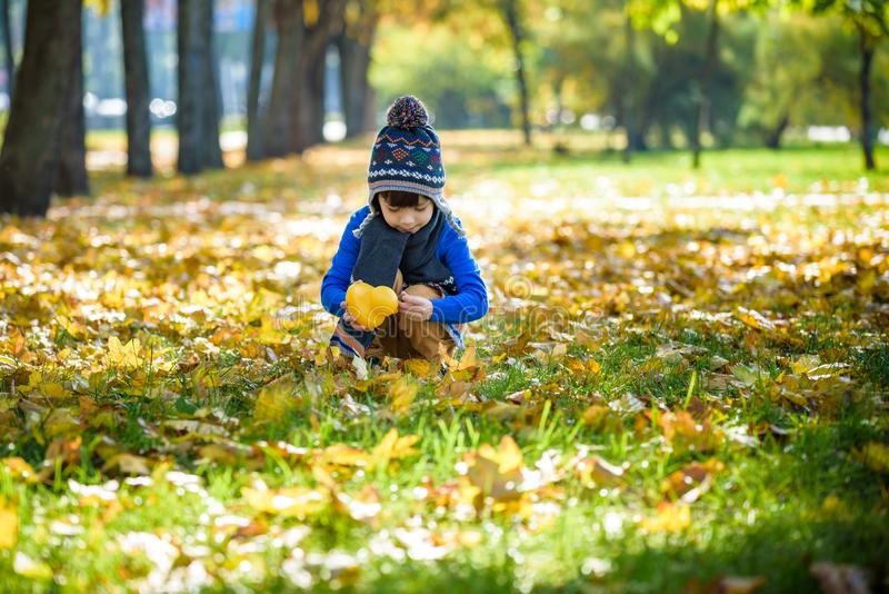 Golden autumn background with the fall leaves and little toddler boy playing in the autumnal foliage. Happy kid enjoying warm. Autumn sunny day. Best concept royalty free stock image