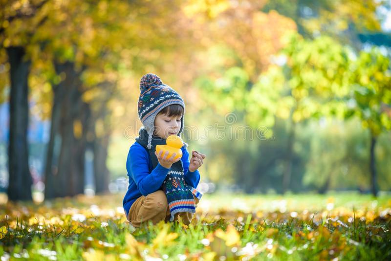 Golden autumn background with the fall leaves and little toddler boy playing in the autumnal foliage. Happy kid enjoying warm. Autumn sunny day. Best concept royalty free stock images