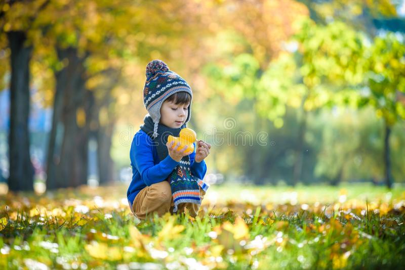 Golden autumn background with the fall leaves and little toddler boy playing in the autumnal foliage. Happy kid enjoying warm stock image