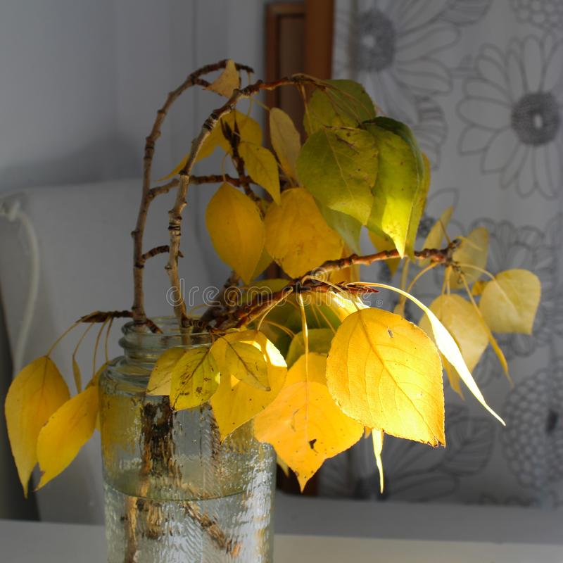 Golden autumn bouquet leaves in home. This is the decoration of your interior. Creates a cozy atmosphere. Autumn mood royalty free stock image