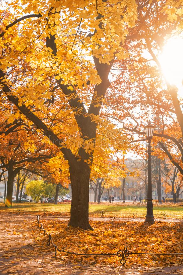 Golden autumn in the city royalty free stock photography
