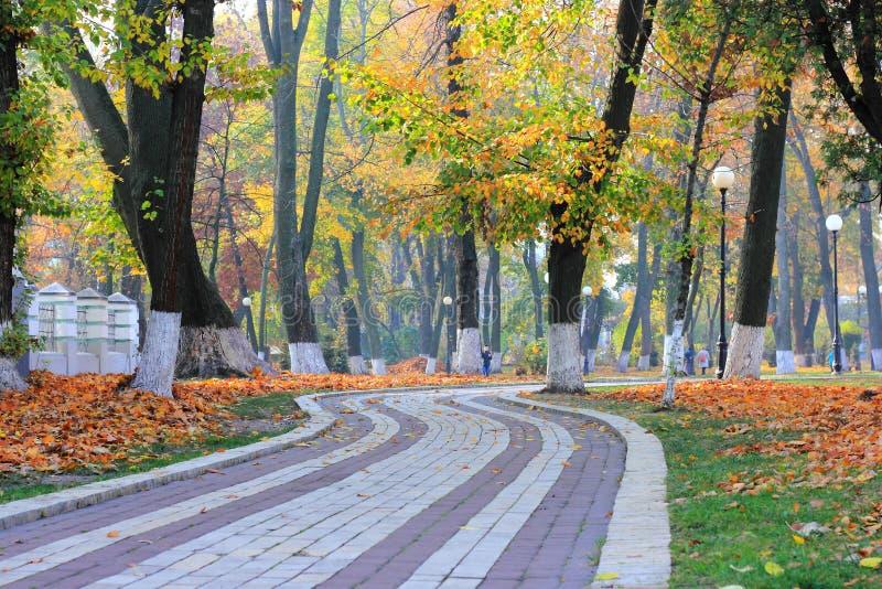 Golden autumn in a city park on a foggy morning stock photos