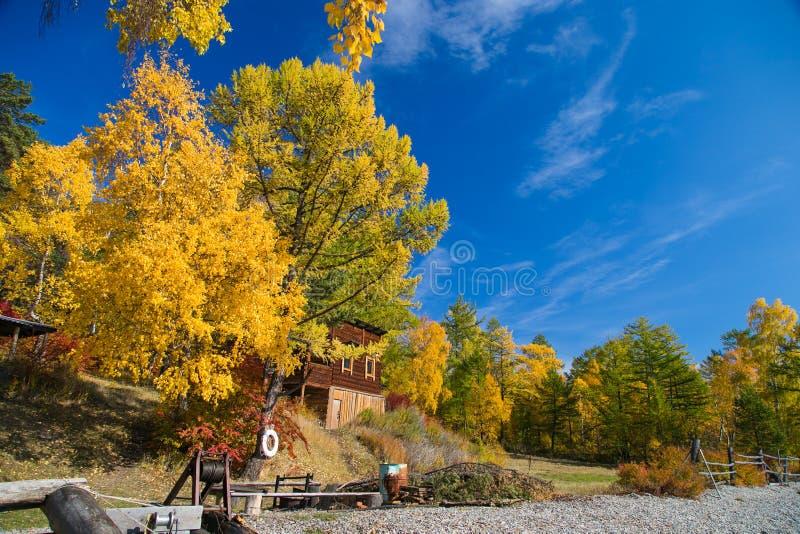 Golden Autumn on the coast stock photos