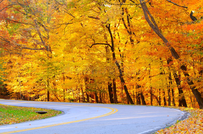 Download Golden autumn curve stock photo. Image of road, striping - 12629284