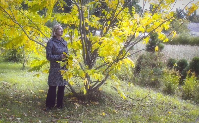Golden autumn. An elderly lady walks through the autumn park on a warm sunny day and admires the bright colors of autumn royalty free stock photo