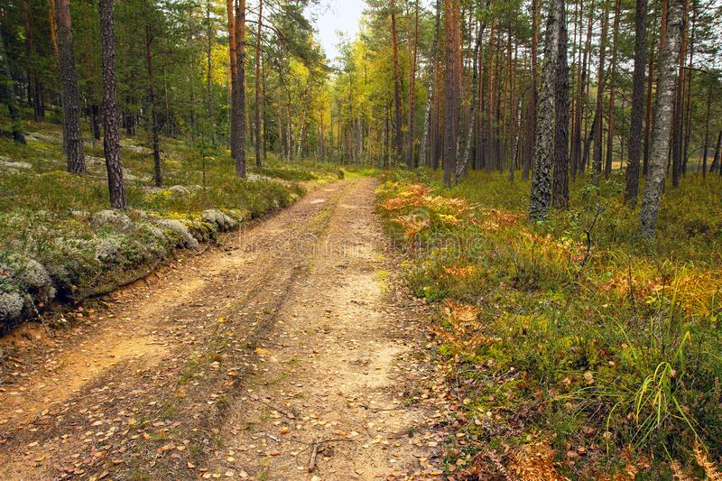 Golden autumn in the forest royalty free stock photography