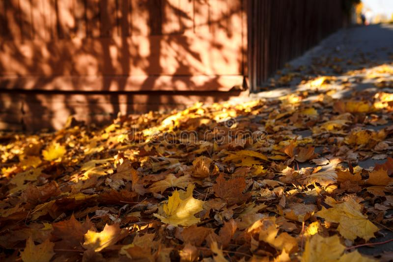 Golden autumn, leaves on earth in the bright light of the sun stock photography