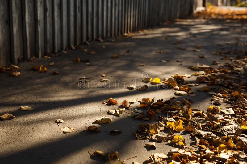 Golden autumn, leaves on earth in the bright light of the sun royalty free stock photo