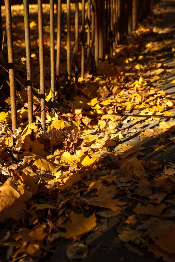 Golden autumn, leaves on earth in the bright light of the sun stock photos