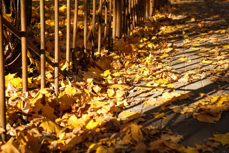 Golden autumn, leaves on earth in the bright light of the sun royalty free stock photos