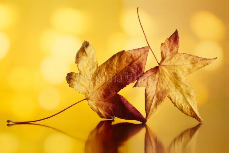 Golden Autumn Leaves royalty free stock photography