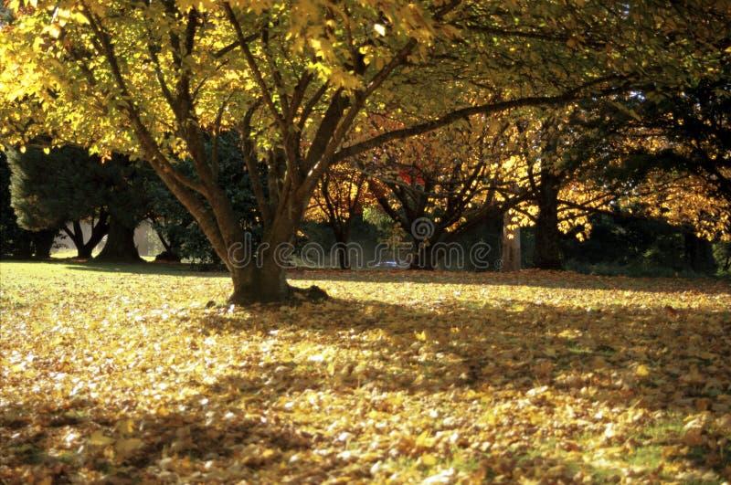 Golden autumn_Mt Lagoon_jpg. Golden autumn at Mt Lagoon NSW Australia royalty free stock image