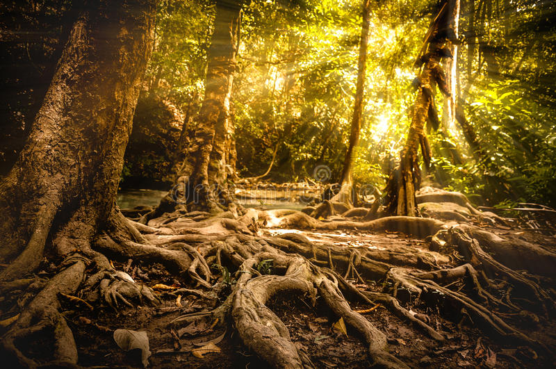 Golden autumn scene in a forest, the sun shining through the trees. stock images