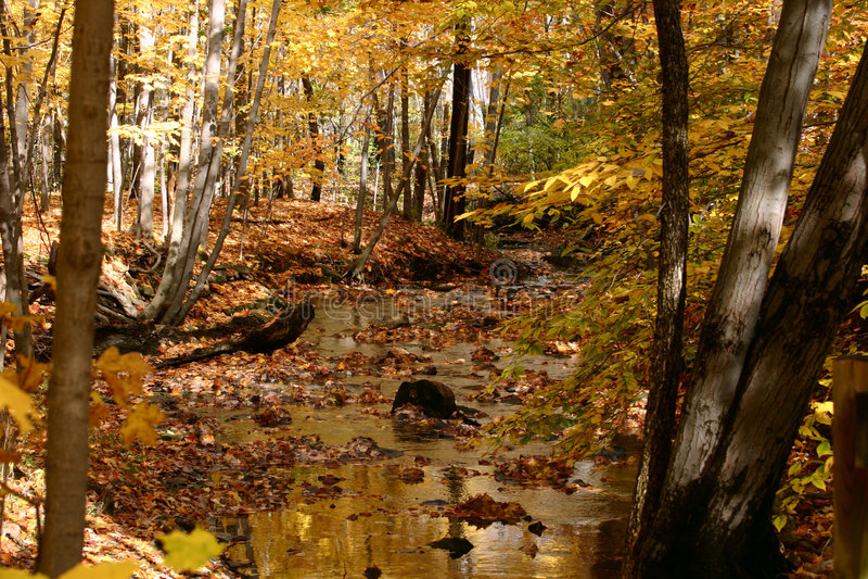 Golden Autumn Stream royalty free stock photography