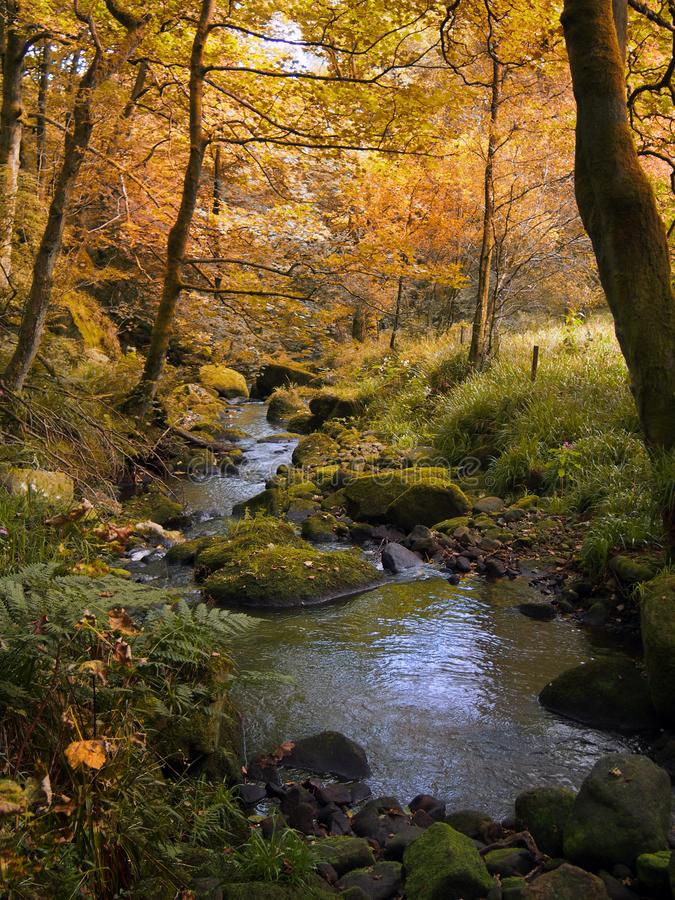 Golden autumn woodland with autumn forest trees with a stream stock image