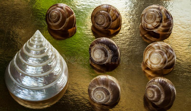A golden background with beautiful mollusc shells. A golden background with seven beige mollusc shells and a pearly cone-shaped one royalty free stock images