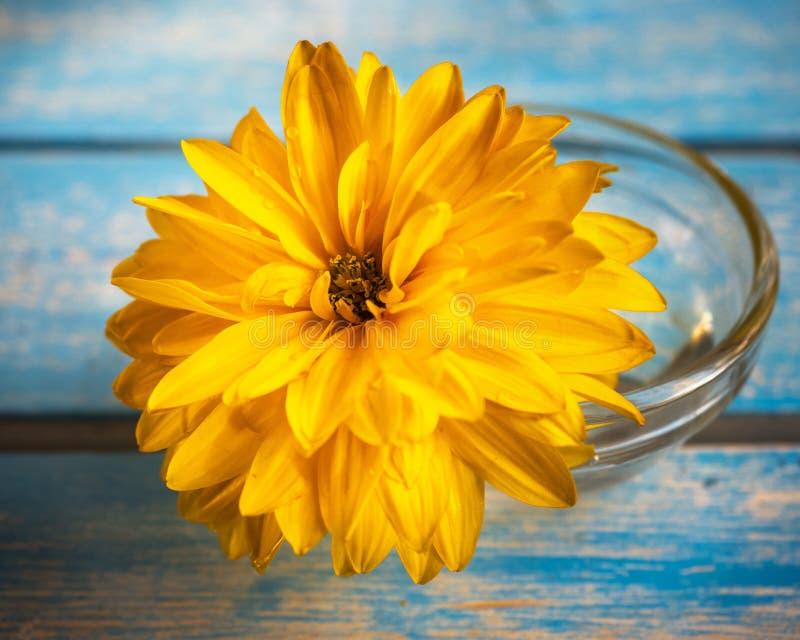 Golden ball or rudbecia in a small glass vase close-up stock photos