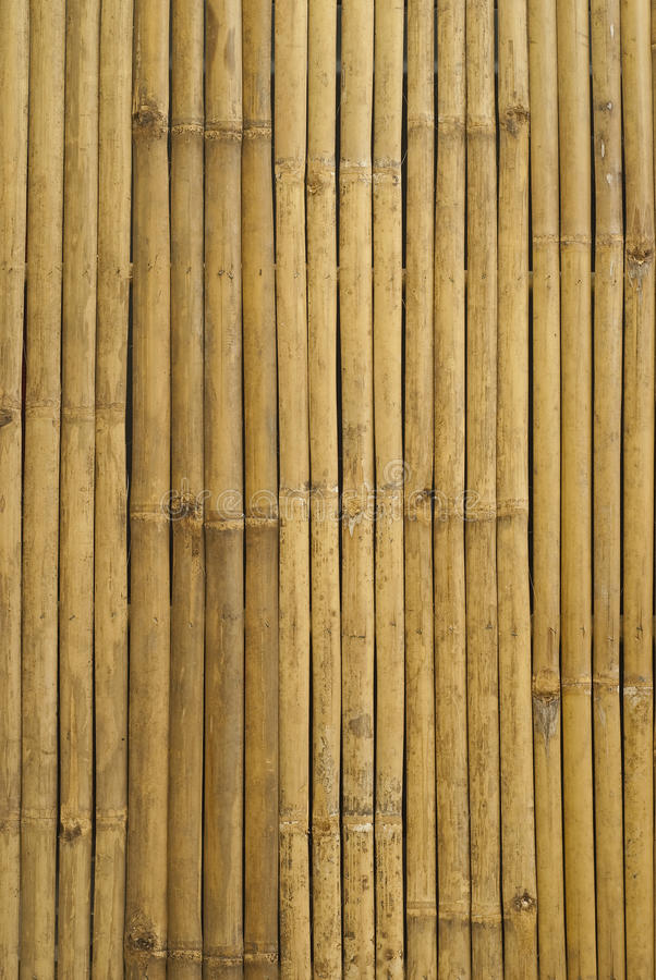 Golden bamboo in Thailand royalty free stock photography