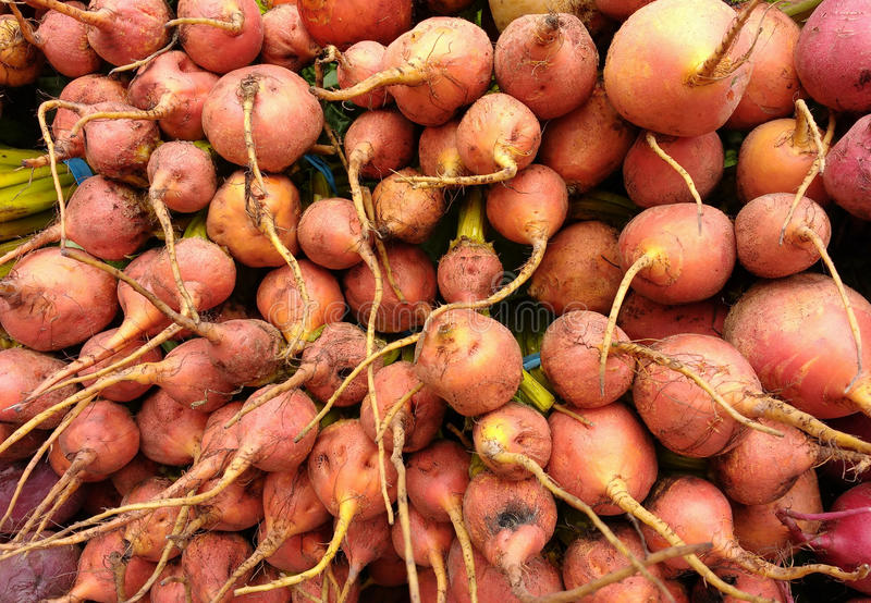 Golden Beets. A table full of golden beets for sale at the Union Square Greenmarket, a popular, year-round farmer`s market in New York City, USA. This photo was royalty free stock photo