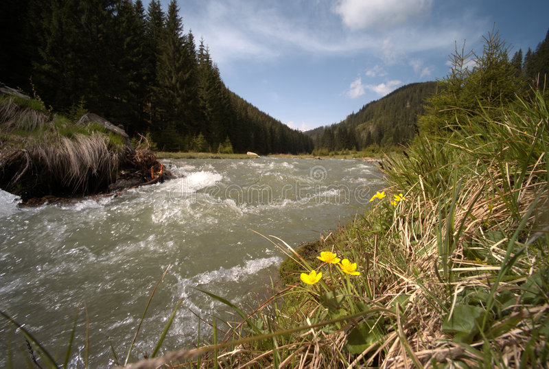 The Golden Bistritz river. Bistritz river, Eastern Carpathians, Romania royalty free stock photos