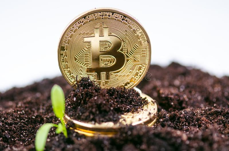 Golden bitcoin coins on a soil and growing plant. Virtual currency. Crypto currency. New virtual money. stock photos