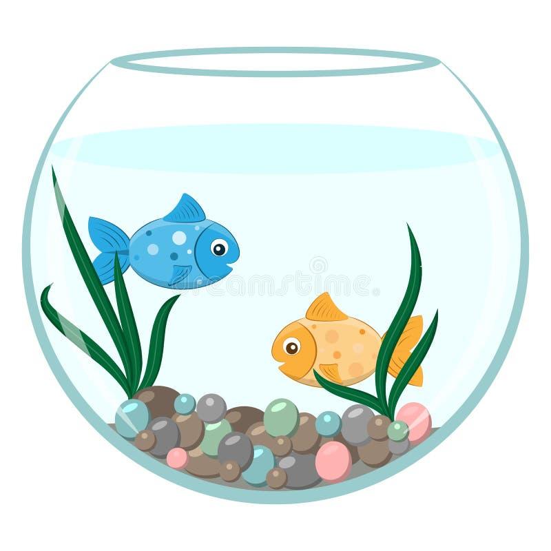 Golden and blue fish in the round aquarium stock photo