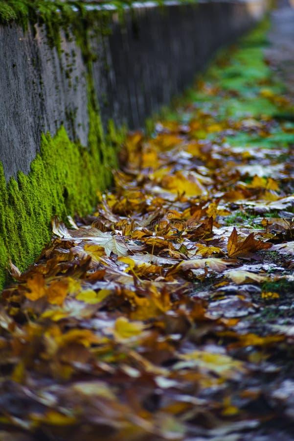 Golden Brown Autumn Leaf on the Ground by a Green Moss Bridge, a Pacific Northwest Fall Season Scenery, Washington, Verenigde Sta royalty-vrije stock fotografie
