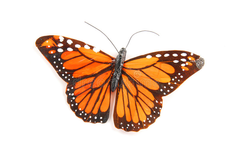 Golden butterfly stock photography