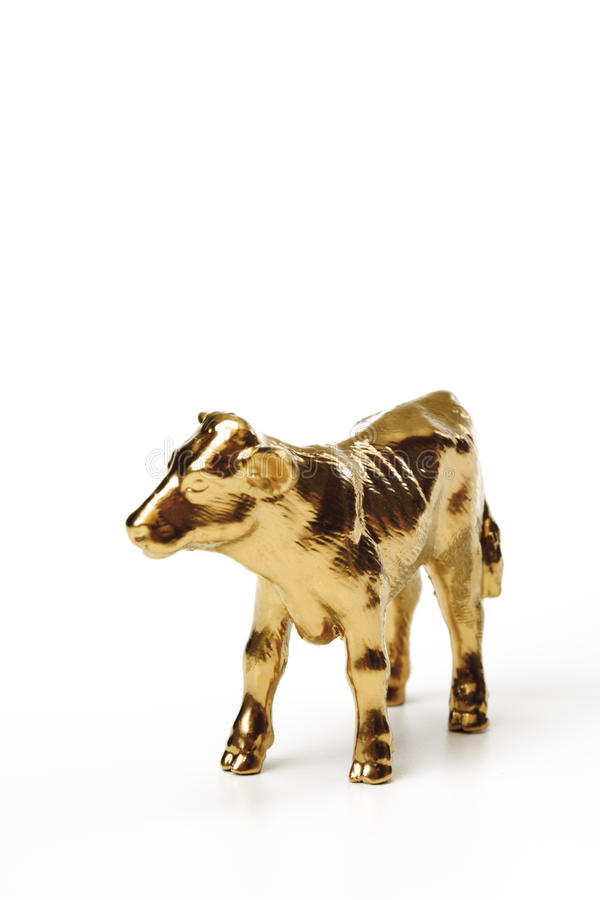Golden calf, close-up royalty free stock images