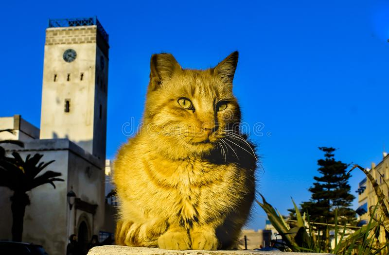 Golden cat in the street royalty free stock image