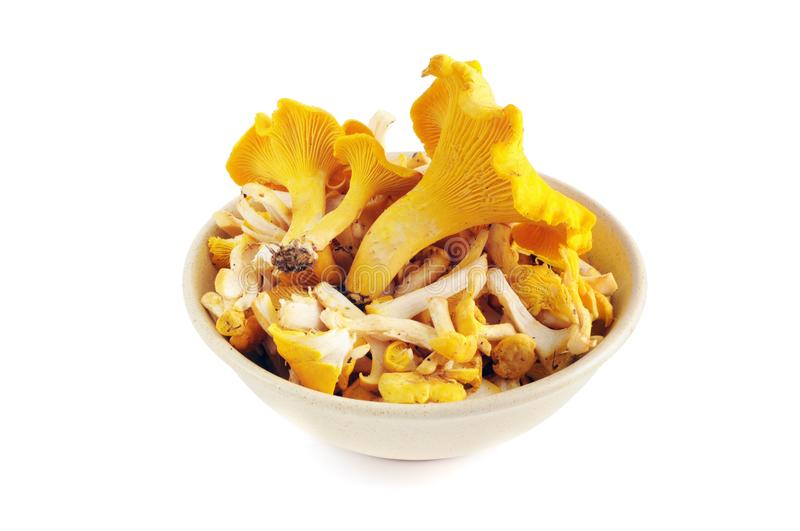 Golden chanterelle mushrooms cutted in a bowl on white isolated royalty free stock photo