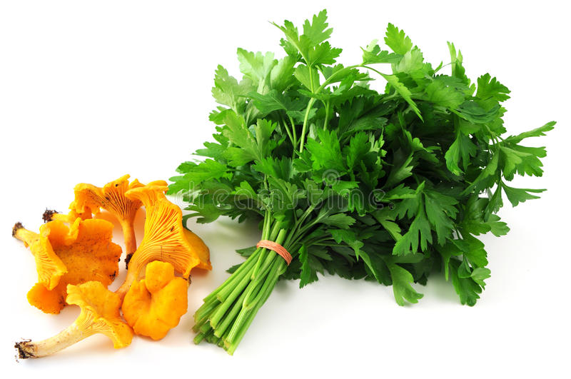 Golden chanterelles mushrooms and bunch of parsley on white isolated background.  royalty free stock image