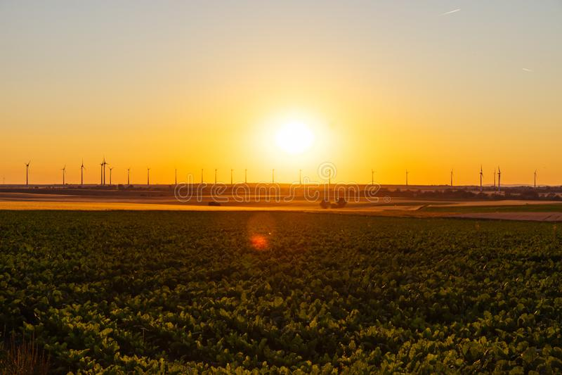 Golden cornfield at sunset with wind turbines in the background stock images