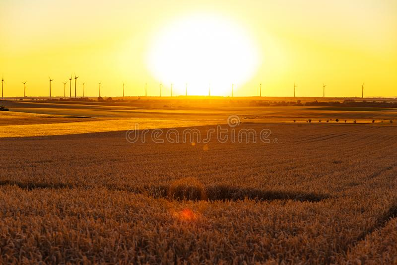 Golden cornfield at sunset with wind turbines in the background stock photography
