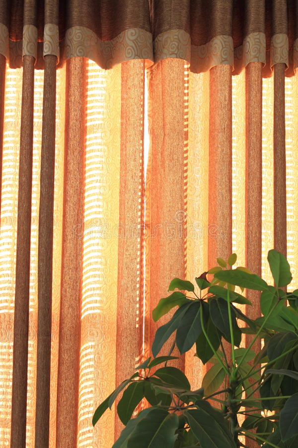 Download Golden Curtain stock photo. Image of fold, home, life - 21918546