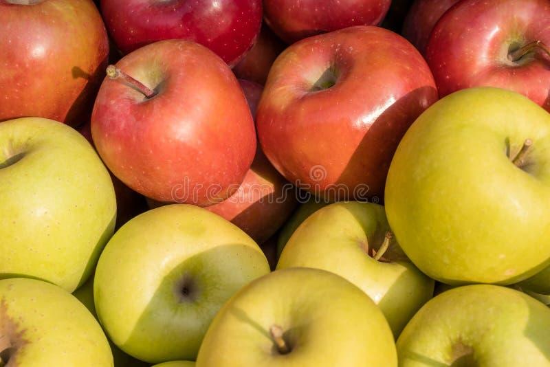Golden delicious und Galaäpfel lizenzfreie stockfotos