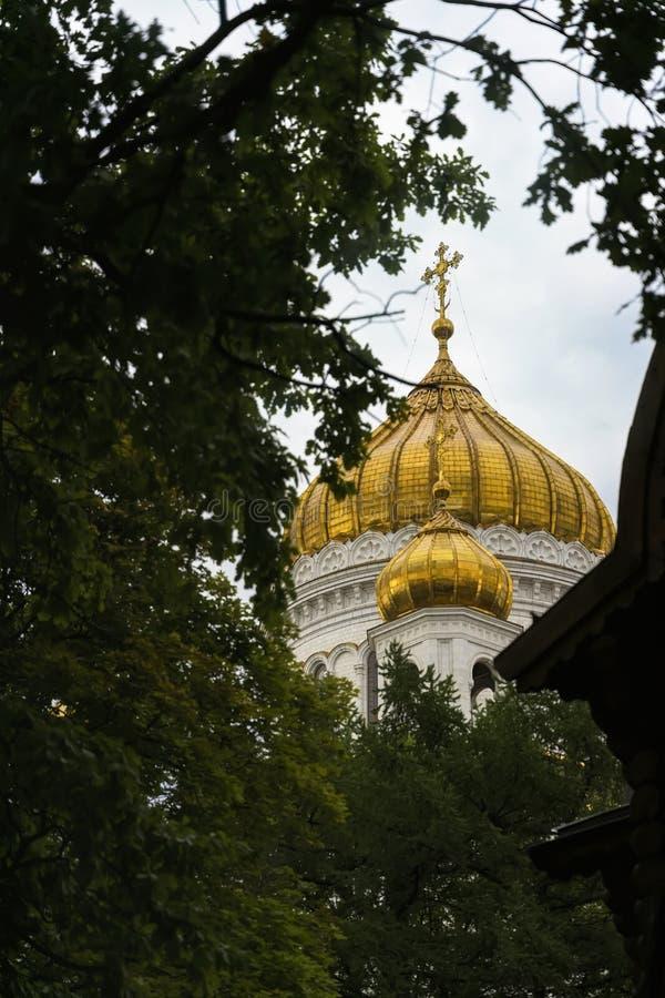 Golden Dome церков с крестом против неба в кроне дерева, христианское правоверное вероисповедание стоковое фото