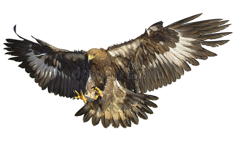 Golden eagle landing on white vector. Golden eagle landing hand draw on white background vector illustration stock illustration