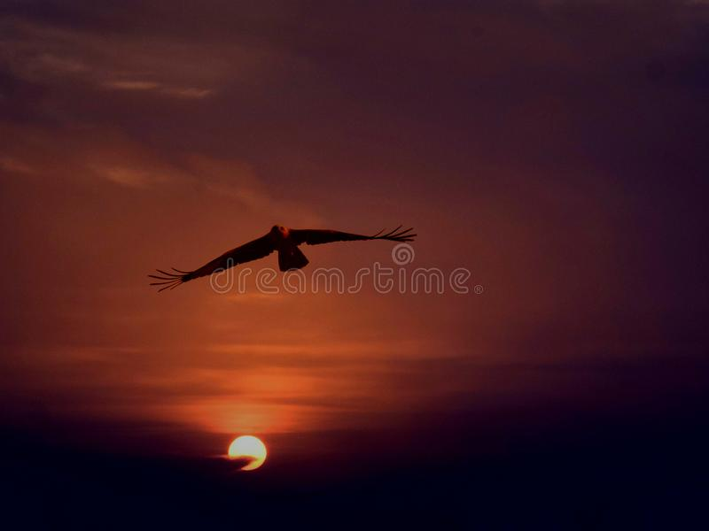 The Golden Eagle. Overflying the sun. Yes that`s what i love to do, said the eagle royalty free stock photography