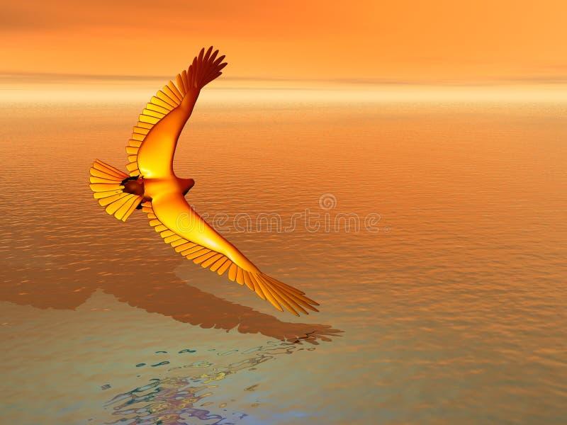 Golden Eagle Skimming stock images