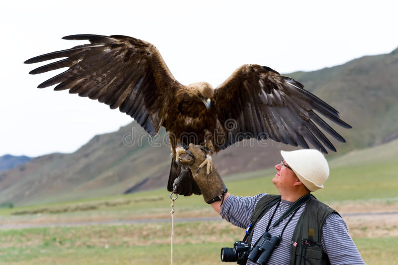 Download Golden Eagle With Spread Wings Stock Photo - Image of male, bound: 10775530
