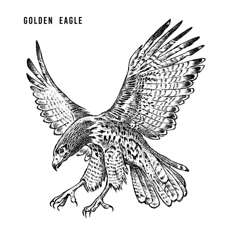 Golden eagle. Wild forest bird of prey. Hand drawn sketch graphic style. Fashion patch. Print for t-shirt, Tattoo or royalty free illustration