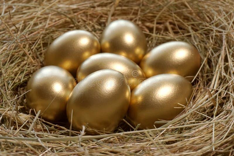 Golden eggs in nest stock images