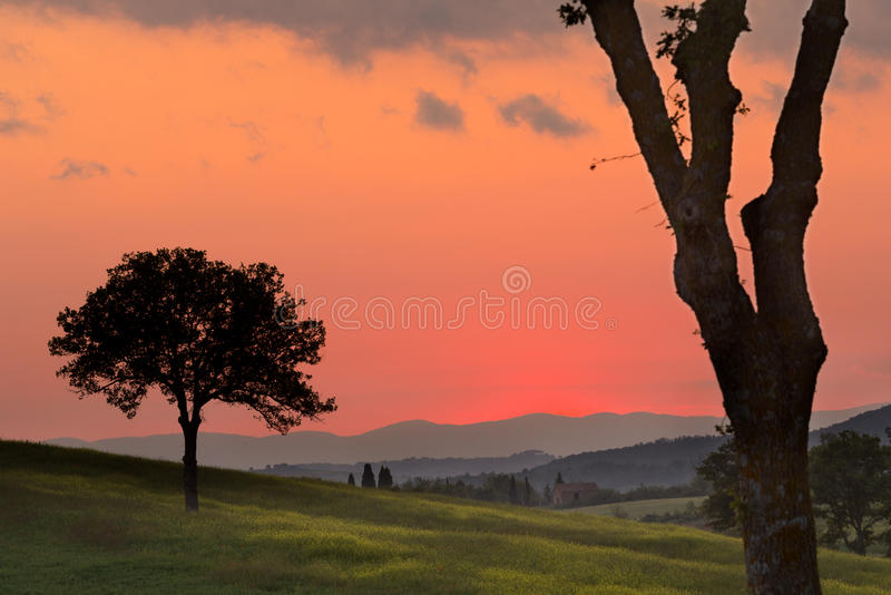 Download Golden Evening In Tuscany Royalty Free Stock Photography - Image: 25545707