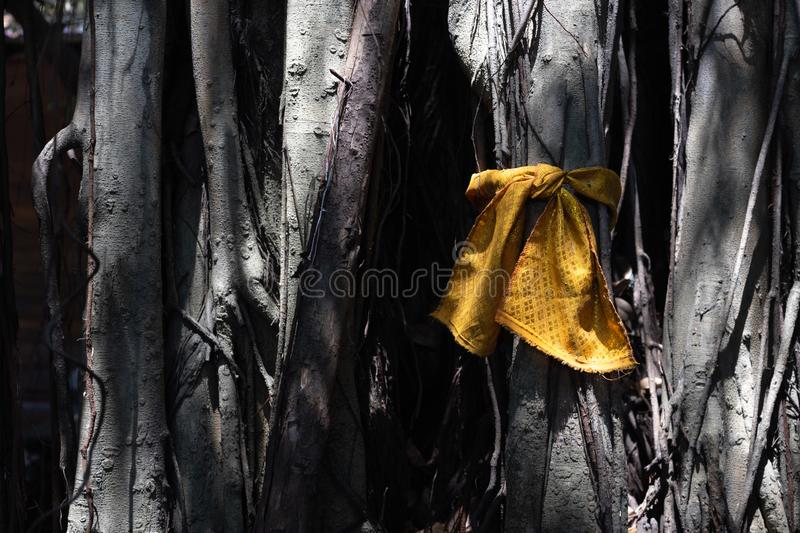 Golden fabric wrapped around big sacred tree for worship the mystery. The sacred place of Buddhists, tree with golden ribbons.  stock photo